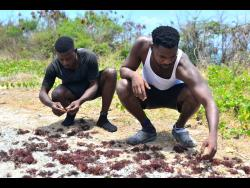 Jaheme Duncan (left) and Obrian Gary examine some of the moss they recently found.