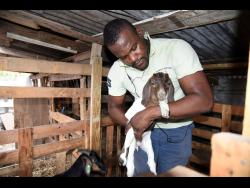 Leon Golding checks on his livestock.