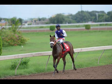 SHE'S A MANEATER, ridden by Omar Walker, wins the 41st running of the Superstakes at Caymanas Park in St Catherine on October 7, 2019.
